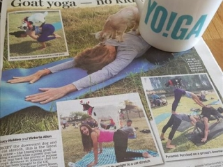 Simply Soulful Goat Yoga_Daily Mail